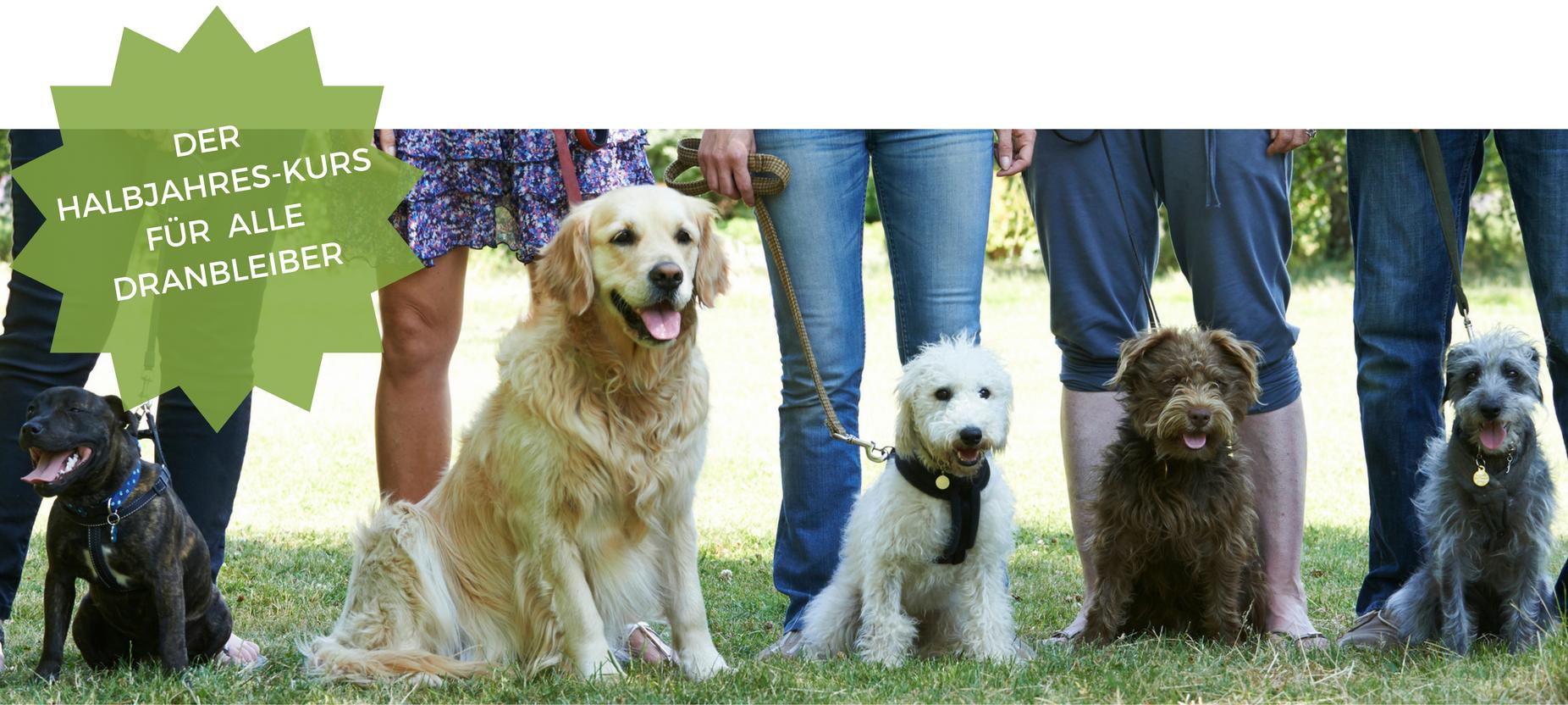 Hundeschule Kelsterbach Dranbleiber-Kurs